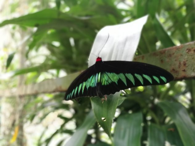 Schmetterling-Park