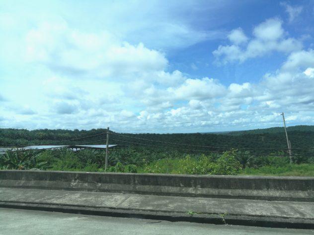 bis an den Horizont sieht man nur Palmen...