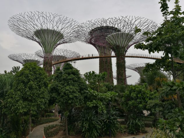 """OCBC Skyway"" im ""Supertrees Garden"""