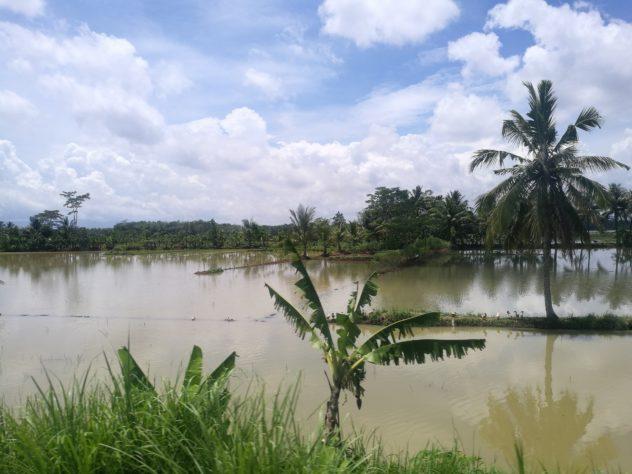 Ausblick aus meinem Zugfenster auf Zentral-Java